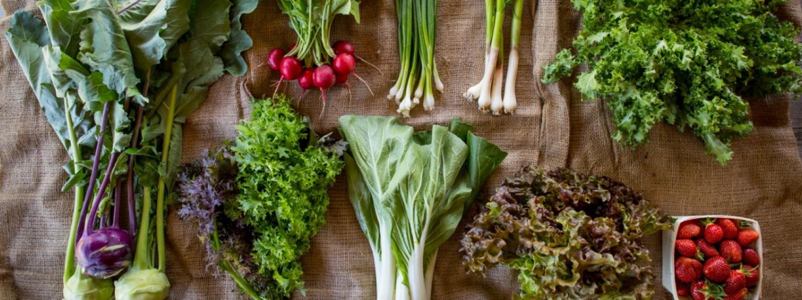 Suggested Reading – Vermont Organic Farm | Cedar Circle Farm ...